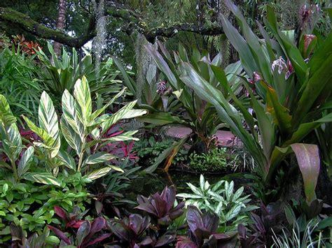 Easy Indoor Tropicals