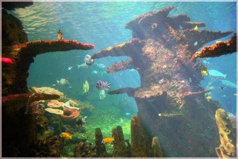 jenis ikan hias air tawar aquarium lengkap