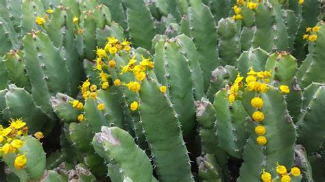 lade per piante giardino botanico isola d elba residence cala dei peducelli