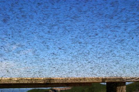 comment tuer les moucherons dans la cuisine comment se débarrasser des moucherons les astucieux