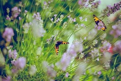 insektensterben  deutschland gruene niedersachsen