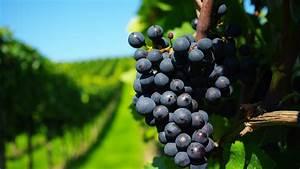 wallpaper grapes 4k food 15355