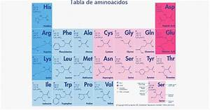 Table Of 20 Amino Acids  Types  Functions And