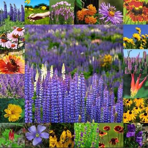 wildflower bulbs wildflower seeds flower bulbs seed packets wildflowers perennials online vermont