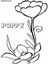 Poppy Coloring Flower sketch template