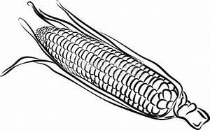 Corn Cob Clip Art Black And White Sketch Coloring Page