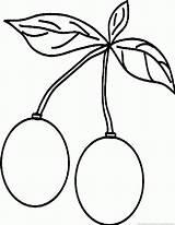 Cherry Fruit sketch template