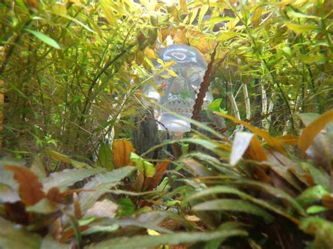 mon aquarium 1000 litres eau douce forum aquarium