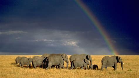 [46+] African Wildlife Desktop Wallpaper On Wallpapersafari