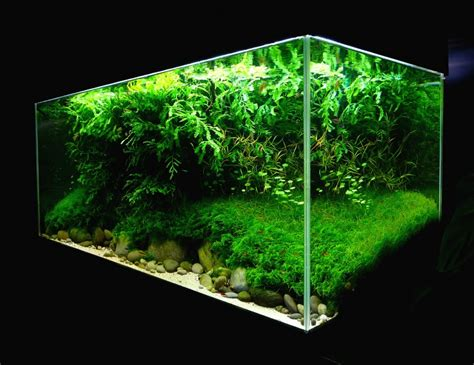 Aquascaping World by Aquascaping World Competition Gallery Erosion By