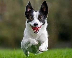 Happy / Smiling Excited Dog | ♥ Happy Smiling Animals ...