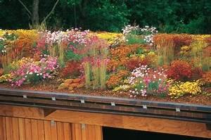 Extensive Dachbegrünung Pflanzen : dachbegr nung ~ Frokenaadalensverden.com Haus und Dekorationen