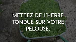 Traitement Mauvaise Herbe : comment liminer les mauvaises herbes naturellement ~ Melissatoandfro.com Idées de Décoration