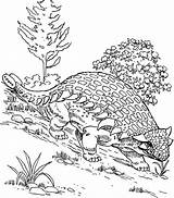 Coloring Hill Ankylosaurus Walking Down Pages Designlooter 1kb 686px Drawings sketch template