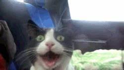 i loooooooooooove cat scared cat gif | WiffleGif
