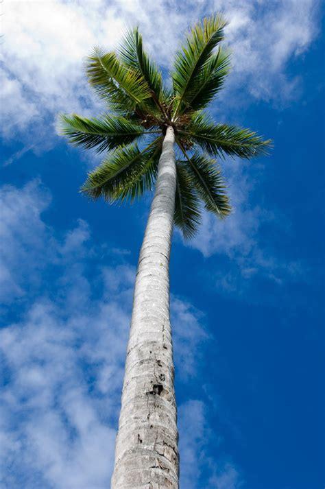 palma slike fotografije slike palmi