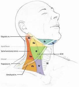 30 Lymph Nodes In Neck Location Diagram