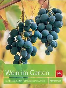 Wilder Wein Sorten : wein im garten die besten sorten schneiden verwerten rebschule schmidt ~ A.2002-acura-tl-radio.info Haus und Dekorationen