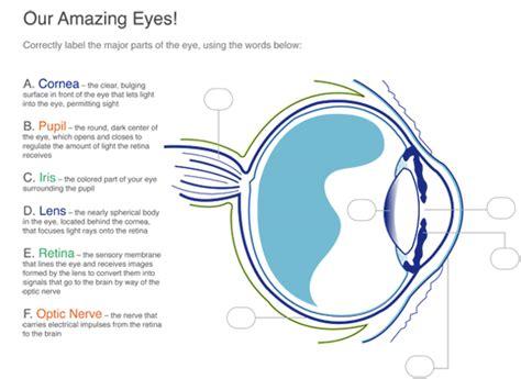 Eye Diagram For Quiz by Schlaefer Optometrists Cbellsport Wi