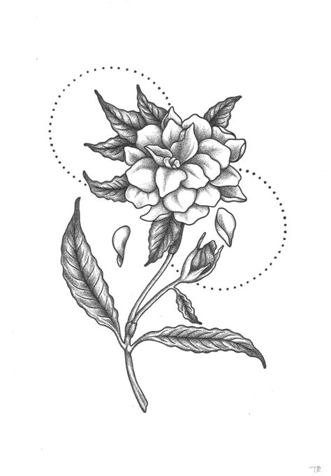 Gardenia Drawing by Gardenia Drawing At Paintingvalley Explore