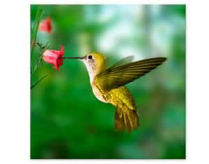klebefolien küche leinwandbild kolibri und blüte amerika