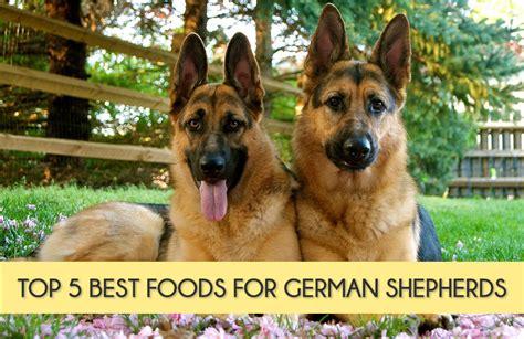 basset hound food goldenacresdogscom