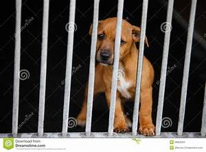 Dog in a cage stock photo. Image of captivity, animal ...
