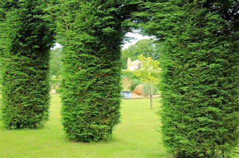 koniferen schneiden wann thuja schneiden koniferen hecken richtig schneiden anleitung plantura
