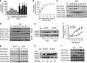 Activation Of The Necroptotic Pathway In Npc1   A