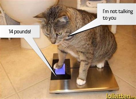 Talking Cat Meme - lolkitten we can t get no catisfaction lolcats kittehs and funny cats page 124
