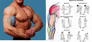 Ways To Increase Arm Muscles By 100