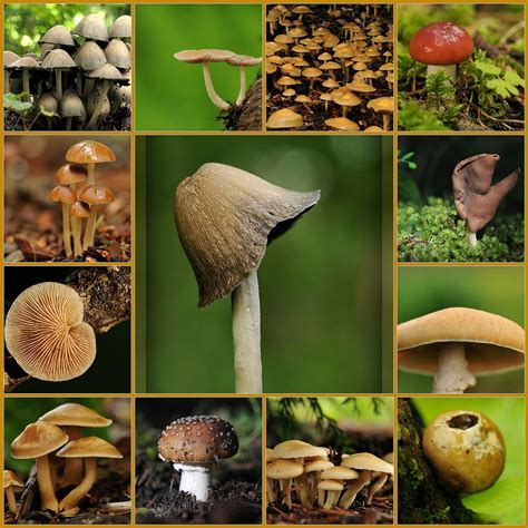 types of mushrooms mushrooms types nutritional value sweet additions