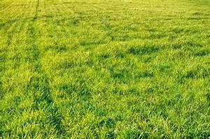 Green Grass Field Texture Background - PhotoHDX