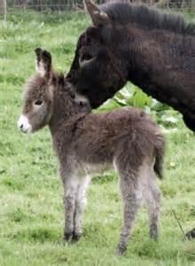 Cute Baby Animals Donkey