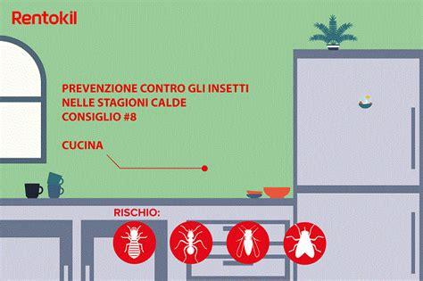 formiche volanti in casa insetti in casa e insetti estivi rentokil italia