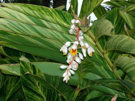 tropical garden plants list 111 best ideas about subtropical garden on pinterest gardens elephant ears and perennials
