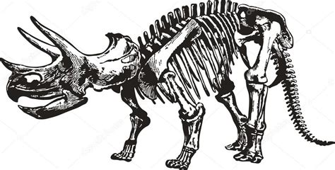 dibujos esqueleto dinosaurio dibujo esqueleto del