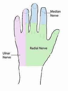 Hand Anatomy Overview