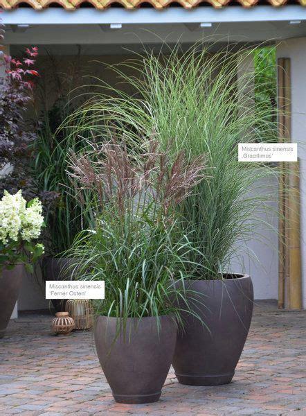 Topfpflanzen Für Den Garten by Pin Tillagd Av Lawahez Meneghin P 229 G 228 Rten Garten Ideen