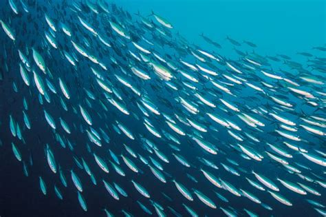 WATCH: Sardines netted on KZN south coast