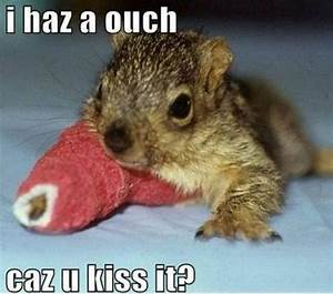 Squirrel Pictures | Cute animal pictures and videos blog
