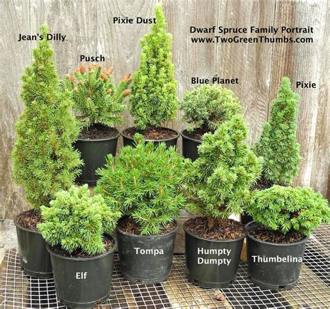 new miniature garden plants for indoor or outdoor the
