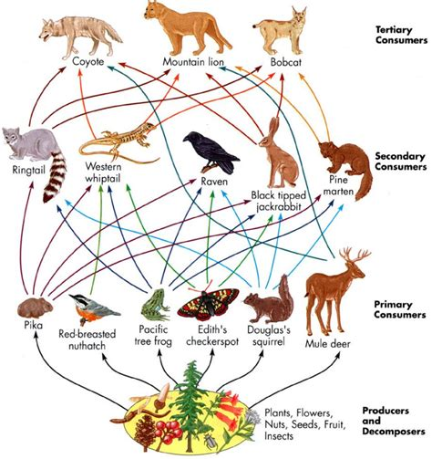 cuisine web tropical rainforests 4 food chains and food webs of the rainforest food webs