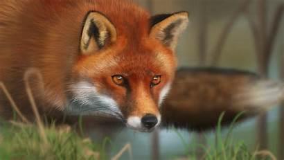 Fox Animal Face Grass Code Wallpapersafari