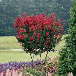 Arbuste Persistant Croissance Rapide : arbres croissance rapide pour les jardiniers impatients ~ Premium-room.com Idées de Décoration