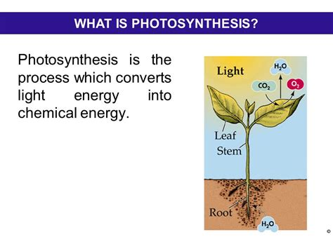 what is light energy photosynthesis ppt