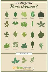 Leaf Identification Guide  Infographic