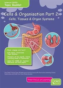 Ce  Ks3 Science  Biology  Cells  U0026 Organisation