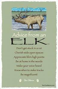 Advice From an ... Elk Animal Quotes