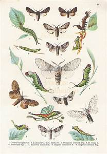 Antique Natural History Print 1900 INSECTS Woodland Forest ...